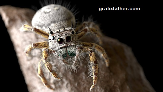 Modeling and Rendering a Realistic Jumping Spider By Gnomon Workshop